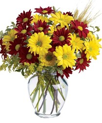 Fall For Daisies from Clifford's where roses are our specialty
