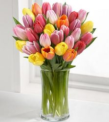 Colorful Tulip Bouquet from Clifford's where roses are our specialty