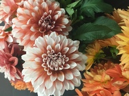 More Dahlias from Clifford's where roses are our specialty