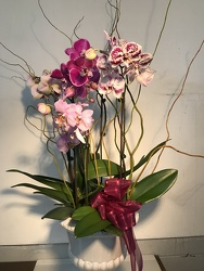 Orchid Garden from Clifford's where roses are our specialty