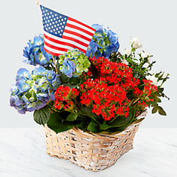 Patriotic Summer Garden from Clifford's where roses are our specialty