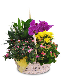 Blooming Garden Basket from Clifford's where roses are our specialty