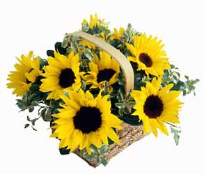 Sunflower Basket from Clifford's where roses are our specialty