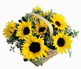 FTD Sunflower Basket
