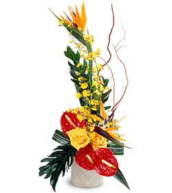 FTD Tropical Bright Arrangement from Clifford's where roses are our specialty