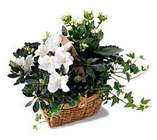 White Assortment Basket from Clifford's where roses are our specialty