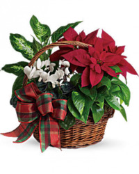 Holiday Dish Garden from Clifford's where roses are our specialty