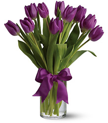 Passionate Purple Tulips from Clifford's where roses are our specialty