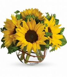 Sunny Sunflowers from Clifford's where roses are our specialty