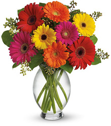Gerbera Brights from Clifford's where roses are our specialty