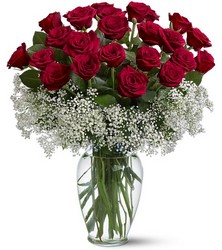 Two Dozen Roses With Babies Breath from Clifford's where roses are our specialty