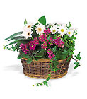 Traditional European Garden Basket from Clifford's where roses are our specialty