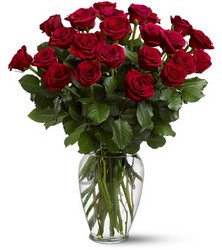 24 Red  Roses from Clifford's where roses are our specialty