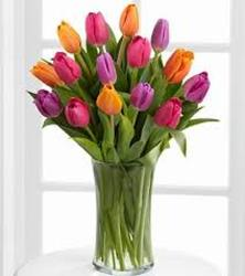 Tulip Time from Clifford's where roses are our specialty