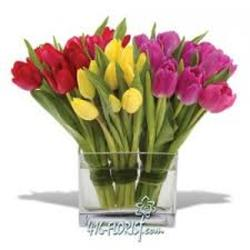 Tulip Trilogy from Clifford's where roses are our specialty